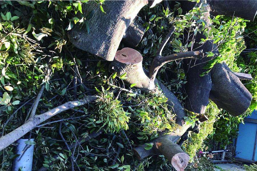 伐採 伐根 剪定6