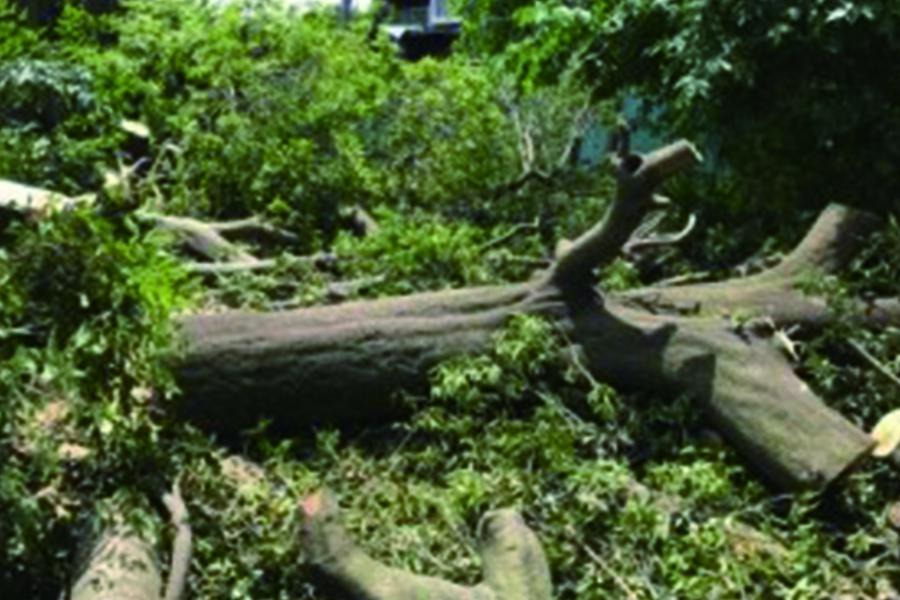 伐採 伐根 剪定1