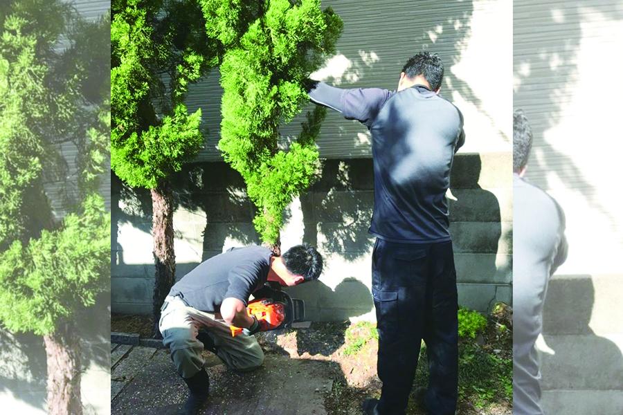 伐採 伐根 剪定4